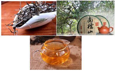 南糯山古树茶 (1)